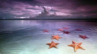 1_starfish